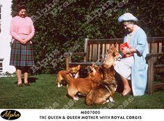 THE QUEEN & QUEEN MOTHER WITH ROYAL CORGIS. #corgi
