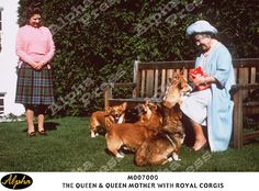 THE QUEEN & QUEEN MOTHER WITH ROYAL CORGIS. #corgi