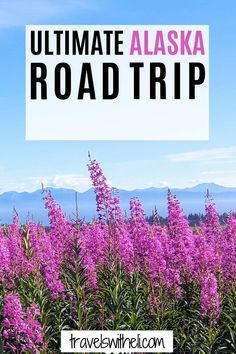 Planning a summer vacation to Alaska? Check out this guide to help you plan the ultimate Alaska Road trip. Highlights of this 10 day itinerary include Denali National Park, Anchorage, Kenai Fjords National park, Seward, Homer, and of course salmon and halibut fishing. #travelswitheli.com Usa Travel Map, Kenai Fjords, Family Travel, Alaska, Travel Destinations, Travel Photography, Road Trip, National Parks, Places To Visit