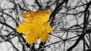 hd single yellow leaf wallpaper download