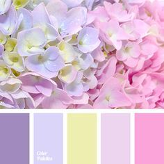 Pink : Beautiful Purple and Pink Hydrangea Flowers Close-up Colour Pallette, Colour Schemes, Color Combos, Color Patterns, Colour Colour, Pink Hydrangea, Hydrangeas, Decoupage Vintage, Color Balance