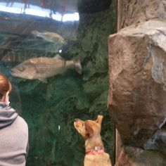 Ignored all the taxiderm animals but fascinated by the fish,  Bass Pro Shop