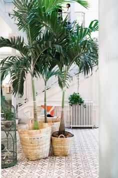 Gonna need at least one of these big tropical plants. Indoor Garden, Indoor Plants, Home And Garden, Tropical Decor, Tropical Plants, Palm Plants, Decoration Plante, Interior Plants, Interior Design