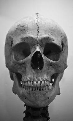 Drawing Human Anatomy Human Skull More - Human Skull Skull Reference, Anatomy Reference, Photo Reference, Anatomy Drawing, Human Anatomy, Gesture Drawing, Der Joker, Skeleton Anatomy, Human Skeleton