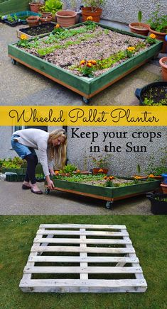 .How to make a Wheeled Pallet Planter - it allows you to pull your plants around flat spaces and both into and out of the sun. Great for small patios and gardens! #pallet