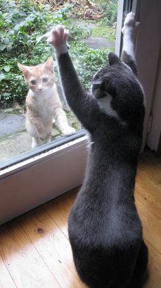 Greeting a friend through the window......