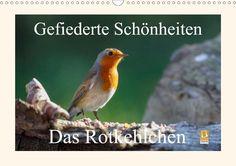 Gefiederte Schönheiten - Das Rotkehlchen - CALVENDO Kalender von Rolf Pötsch -  #calvendo #calvendogold #kalender #fotografie #rotkehlchen #voegel #tierfotografie