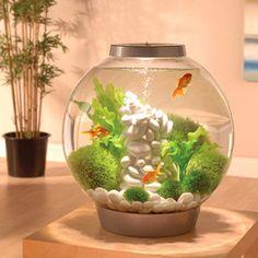 You maybe asking Hot to set up aquarium. The Biorb aquarium makes a simple beginner aquarium for any aquatic enthusiast. Ideal for tropical freshwater fish! Betta Aquarium, Biorb Aquarium, Betta Fish Tank, Klein Aquarium, Aquarium Kit, Home Aquarium, Small Fish Tanks, Cool Fish Tanks, Tropical Fish Tanks