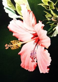 Pink Tropical - Watercolor, painting by artist Jacqueline Gnott