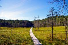 Beatiful landscape in Kainuu