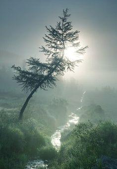 Magnificent  Nature...       ~CRV~
