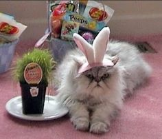 Cats Dressed As Bunnies - BuzzFeed Mobile
