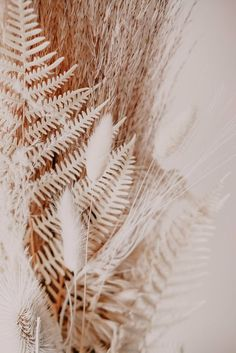 Aesthetic Backgrounds, Photo Backgrounds, Aesthetic Iphone Wallpaper, Aesthetic Wallpapers, Beige Wallpaper, Bunny Tail, Plant Images, Brown Aesthetic, Pampas Grass