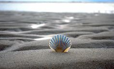 Monomoy Shell by Kristin Hughes on 500px