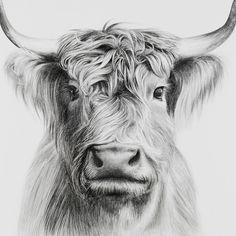 Realistic Animal Drawings, Pencil Drawings Of Animals, Horse Drawings, Animal Sketches, Art Drawings Sketches, Art Illustrations, Drawing Animals, Graphite Drawings, Horse Pencil Drawing
