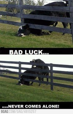 humor | Funny | lol | animals