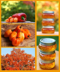 Sweet Heat! Habanero Pepper Jelly <3 The Beautiful Fall Colors of Red and Gold ... Habanero Style!