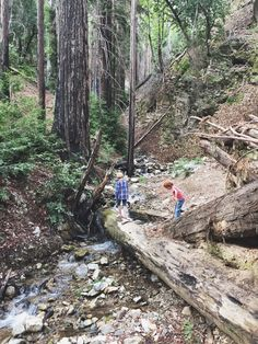 Going through Los Padres National Forest, we found a fun stream with beautiful redwoods to let the kids run around. // Family Trails