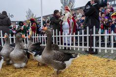 Intocht Sinterklaas in Almere Haven, 15 november 2014 © Geert Fotografeert / Corrosia Stad