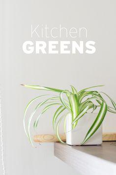 Urban Jungle Bloggers: Kitchen Greens by @WIESOBLOG