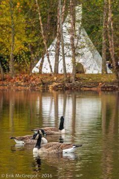 TIPI - Composition Friday #PhotoOfTheDay #tipi #NativeAmerican #indigenous #LivingSpace #IndigenousLand #CanadianGoose #geese #nature #outdoors #water #river #warterways #habitat #NewYork #Ramapo #Ramapough #Lenopi #ecosystem #WaterIsLife #AmazingPlanet #BrantaCanadensis #birds #birdstagram #birdsofinstagram #BirdsOfNY #NYbirds #NaturePhotography #Photography #NikonPhotography #Nikon #2016 #Art #ErikMcGregor  © Erik McGregor - erikrivas@hotmail.com - 917-225-8963