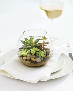 It's a fishbowl full of succulents!