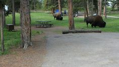 1000 images about yellowstone fun on pinterest fishing for Fishing bridge campground