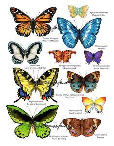 Colorful Butterfly Print by Reneé Charisse Jardine ~ Studio Jardine Names Of Butterflies, Beautiful Butterflies, Butterfly Frame, Butterfly Print, Butterfly Species, Butterfly Meaning, Office Color Schemes, Garden Insects, Backyard Birds