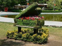 animals tocant el piano - Cerca amb Google