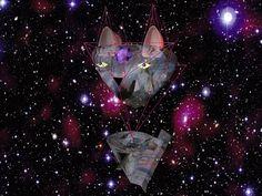 #cat #spaceship // Lisa Kampf