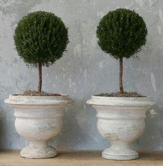 topiaries. urns. symmetry.