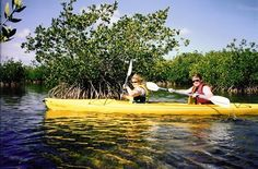 Explore the amazing ecosystem of Key West from the seat of a kayak.