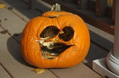 How to prevent your pumpkin from rot and mold!