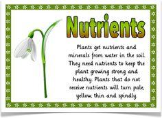 Helping Plants Grow Well - Treetop Displays - EYFS, KS1, KS2 classroom display and primary teaching aid resource
