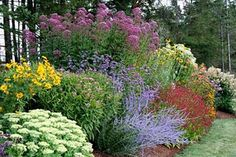 a great combo for several reasons...all perennial, score! great layering and use of height structure. crazy colorful and interesting in each season. Eupatorium in back, Russian Sage in the front. Annual Verbena Bonariensis andSedum to name a few.