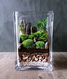 Bring nature indoors with this micro garden landscape. It features mini mounds of moss and palm-tree shaped Selaginella plants with for bonsai-like
