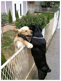Puppy love just melted my heart
