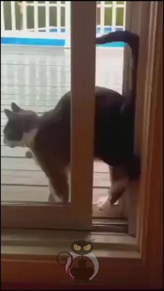 Funny Cute Cats, Cute Cats And Dogs, Cool Pets, Cute Funny Animals, Funny Dogs, Animals And Pets, Cute Animal Photos, Cute Animal Videos, Funny Animal Pictures
