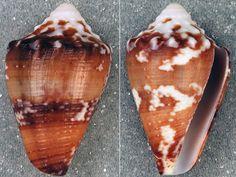 Snail venom compound 'offers unending torment treatment'