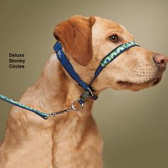 Gentle Leader Deluxe Headcollar & Leash - Gifts for pet lovers, gifts for Labrador Retriever parents, Labrador Retriever gifts, Christmas gifts for Labrador Retriever lovers, gifts for dog lovers, dog crate for big dogs #labradorretriever