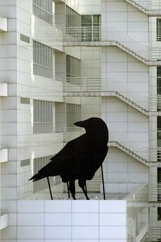 Black Crow  Various locations 2005- 2006  Now situated at the Natural History Museum Rotterdam  6 x 5 x 6 meters  Metal and eggshell enamel paint