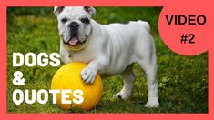 Cute Dog Videos [Video With Motivational Quotes Cute Baby Dogs, I Love Dogs, Cute Babies, Videos Video, Dog Videos, Some Motivational Quotes, Cute Creatures, Im Trying, Dog Quotes