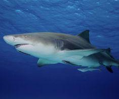 New York Ends Shark Fin Trade