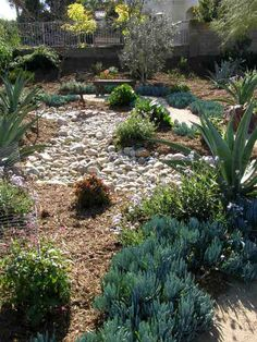 Dry Yard Landscaping