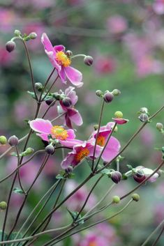 Green Flowers, Colorful Flowers, Beautiful Flowers, Anemone Du Japon, Japanese Anemone, Garden Online, Sloped Garden, Flower Garden Design, Landscape Edging
