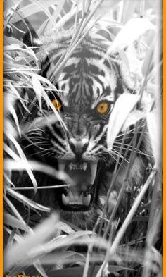 Fondo orange tiger 360 hc para celular