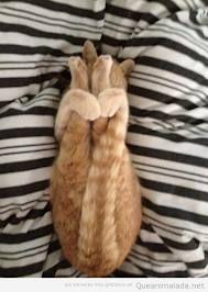 Las posturas del gato