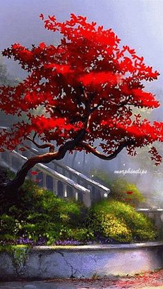 Red tree shedding it's autumn leaves~ Beautiful Gif, Beautiful Pictures, Beautiful Places, Amazing Gifs, Amazing Nature, Gif Pictures, Nature Pictures, Gif Bonito, Red Tree