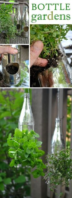 Creative Outdoor Herb Gardens • Ideas and Tutorials! Including from '11 eureka', this DIY herb garden in bottles made from mercury bottles meant to be candleholders.