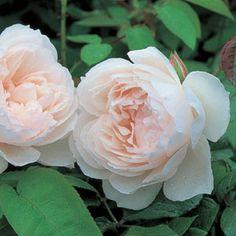 The Generous Gardene